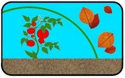 Укрывной материал продлевает период вегетации